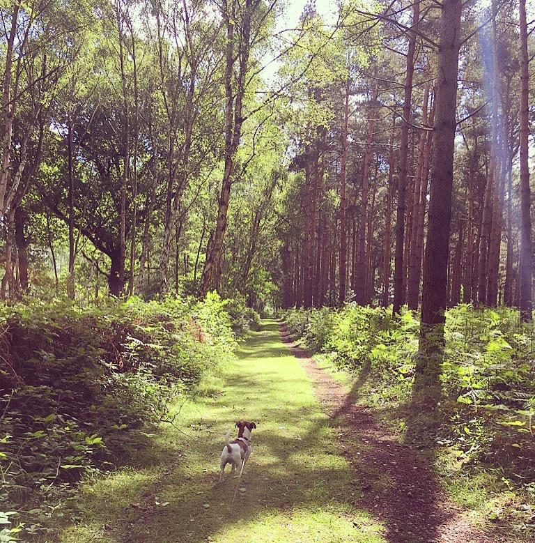 sherwood hideaway